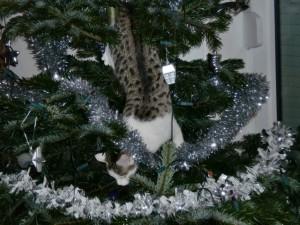 141224_Tiffy_Weihnachtsbaum