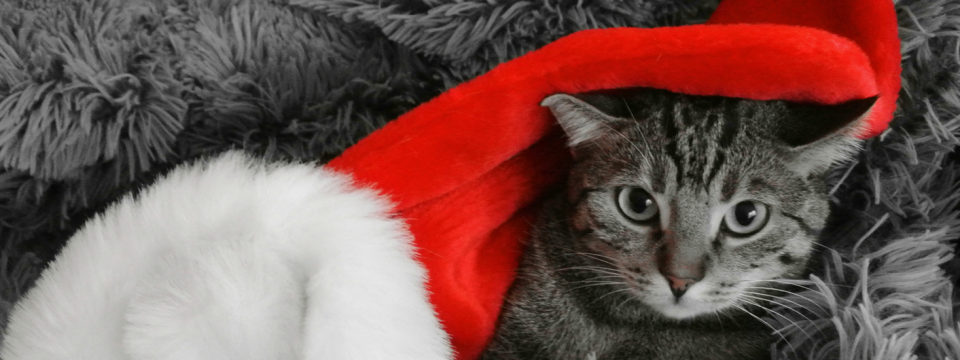 Frohe Weihnachtszeit & eingesundes neues Jahr!
