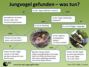 LBV_Leitfaden_Vogel_gefunden