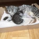 Mutterkaze mit 2 Babies