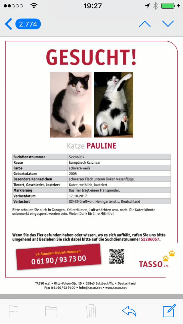 Wunderbar Verlorene Katze Flyer Vorlage Bilder - Entry Level Resume ...