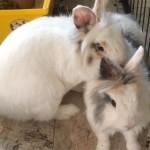 2018-3 Fluffy und Jacky2