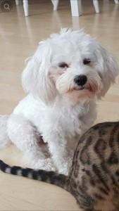 2018-6-Hund Ricky Pflegeplatz