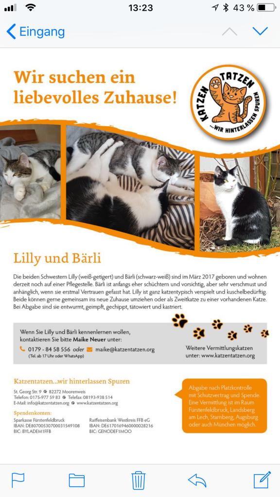2018-6-Katzentatzen Gesuch Bärli
