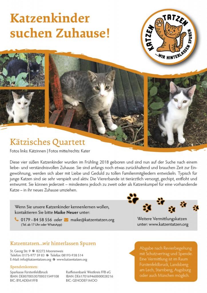 2018-8 Katzentaten Katzenkinder