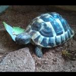 2018-9-vermisste Schildkröte Iffeldorf