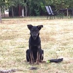 2018-11 Hunde Senekos Serbien extern4