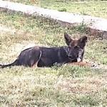 2018-11 Hunde Senekos Serbien extern6