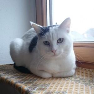 Kitty, die Mutter von Tobi