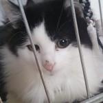 2018-11-schwarz-weiße Plüschkatzen1
