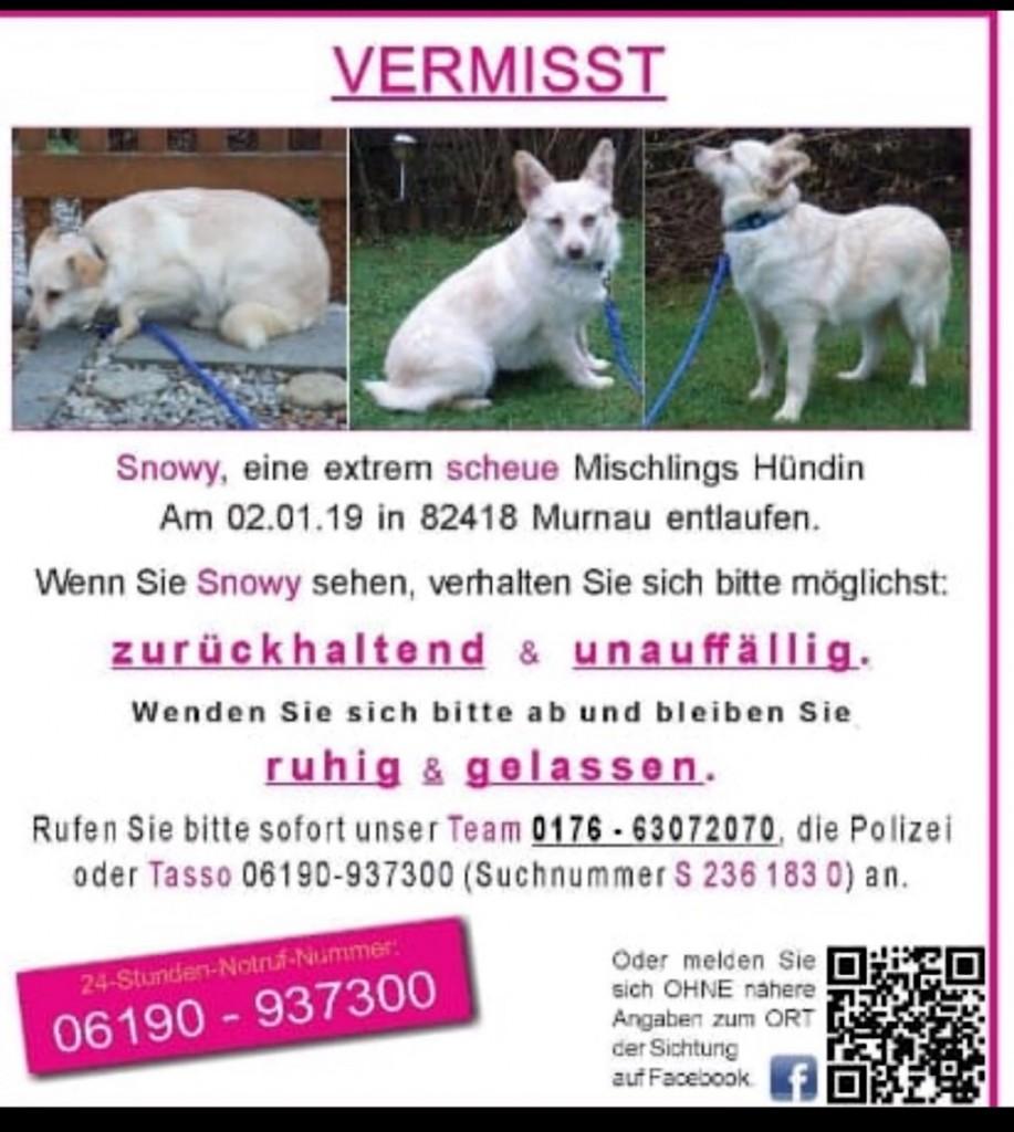 2019-1 vermisster weißer hund murnau