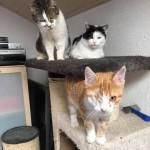 19-4-Tierschutz Gruppe Katzen