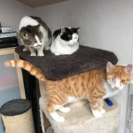 19-4-Tierschutz Gruppe Katzen2