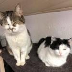 19-4-Tierschutz Gruppe Katzen3
