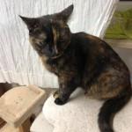 19-4-Tierschutz Gruppe Katzen4