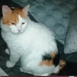 19-4-Tierschutz Gruppe Katzen5
