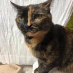 19-4-Tierschutz Gruppe Katzen6