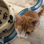 19-4-Tierschutz Gruppe Katzen7