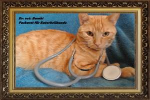 Dr. Bambi Facharzt Katerheilkunde