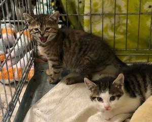 19-6-Babykatzen2-2
