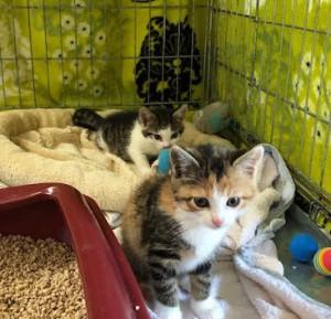 19-6-Babykatzen2-3