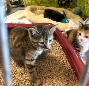 19-6-Babykatzen2-4