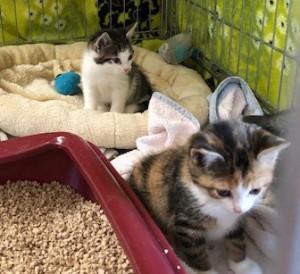19-6-Babykatzen2-5