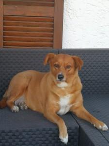 19-6 Hund Niki vermisst Bene