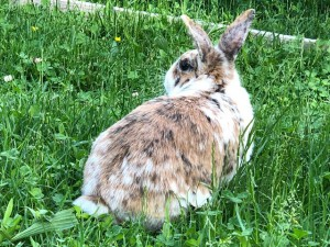 19-6-Kaninchen Pünktchen2