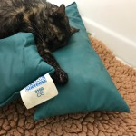 19-7-verletzte Katze Antdorf2