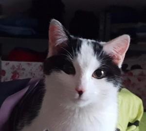 19-7-vermisste Katze Maya