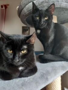 Mogli und Mina