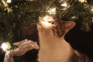 Weihnachten Katze riecht an Baum