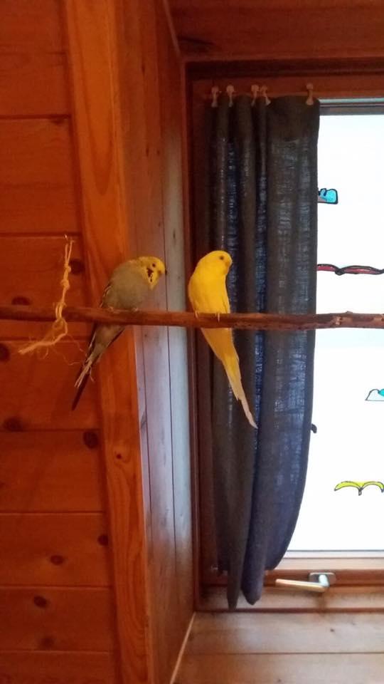 20-1-Vogel Pablo und Pepito