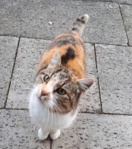 20-1-dreifarbige Katze Sindelsdorf