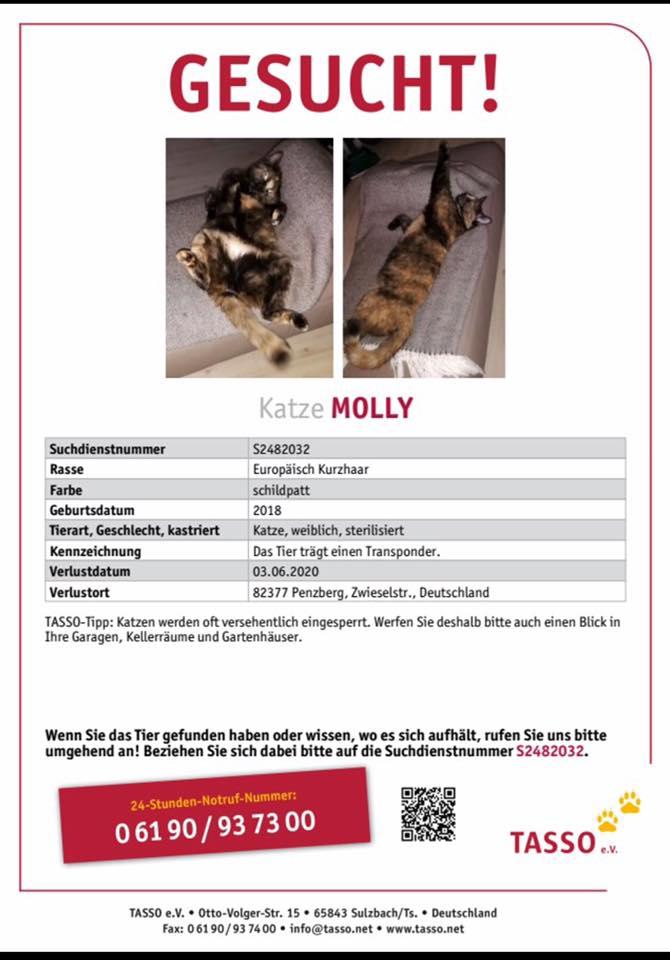 2020-6-vermisste Katze Molly