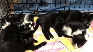 2020-9 fünf neue Kätzchen1