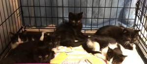 2020-9 fünf neue Kätzchen2
