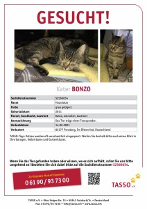 2021-2-Kater Bonzo TASSO_Suchplakat_S2566654