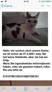 21-4-vermisste Katze Seeshaupt1