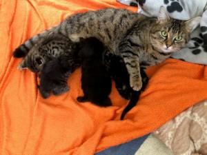 21-5-Mutterkatze Maja4 mit Babys