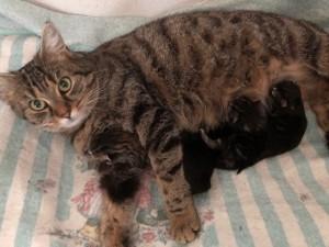 21-5-Mutterkatze Maja6 mit Babys