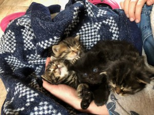 21-5-Mutterkatze Maja7 Babys Übersicht