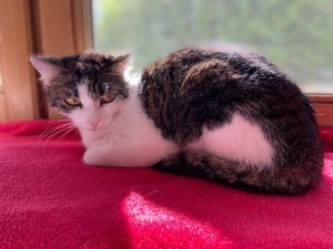 21-6-aufgefundene Katze Mia