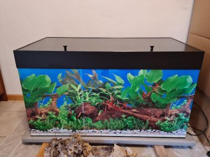 21-7-aquarium1