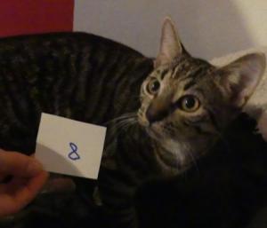 Katzen10