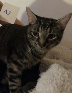 Katzen12