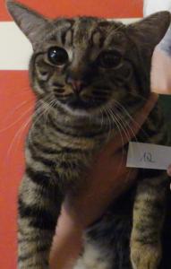 Katzen16