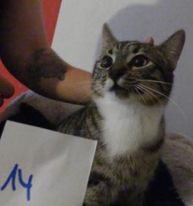 Katzen19
