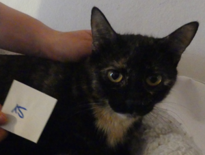 Katzen20